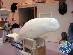 Creating an Artificial Narwhal Wildlife Mount